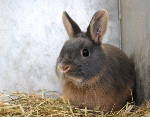 Veel konijnen leven een ellendig leven