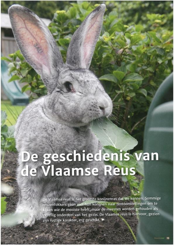 Cover artikel VlaamseReus