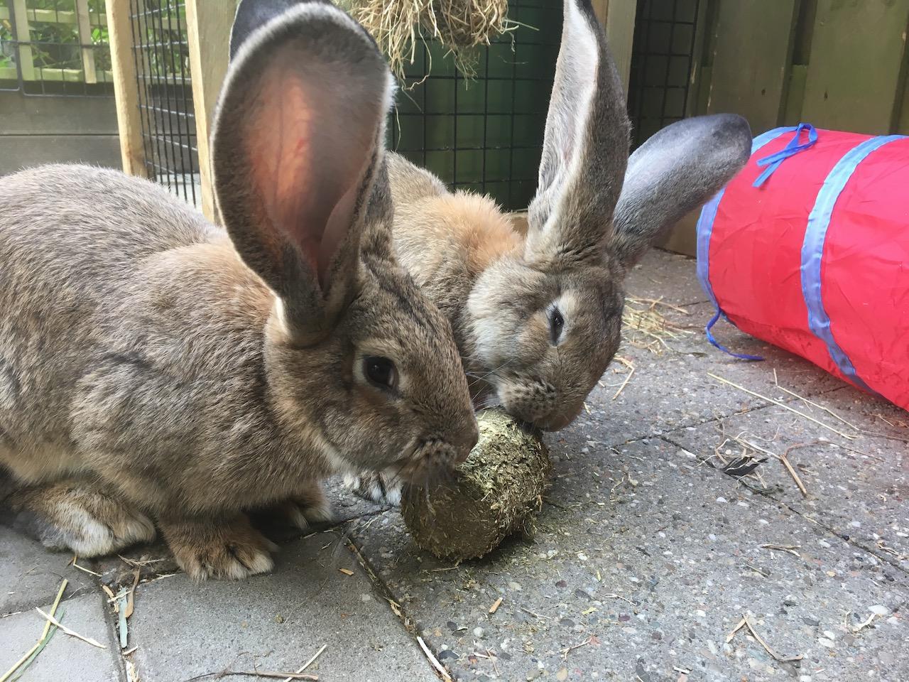 Samen een hooichunck eten