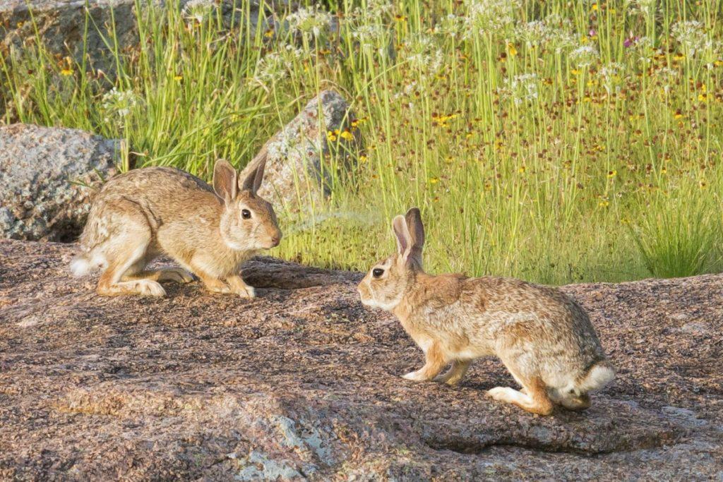 Wilde konijnen zijn ook niet zomaar vriendjes