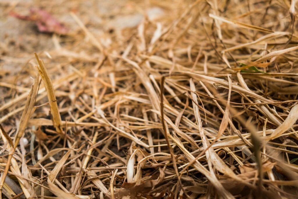 Foto: Het eten van stro heeft een positief effect op de algehele gezondheid van een konijn
